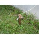 Ground Rod (หลักดิน) พร้อม แคล้มจับ ขนาดความยาว 60 เซนติ